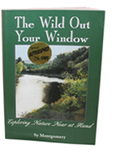 The Wild Out Your Window