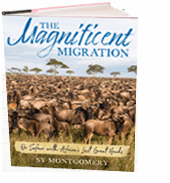 The Magnificent Migration: On Safari with Africa's Last Great Herds