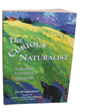 The Curuious Naturalist